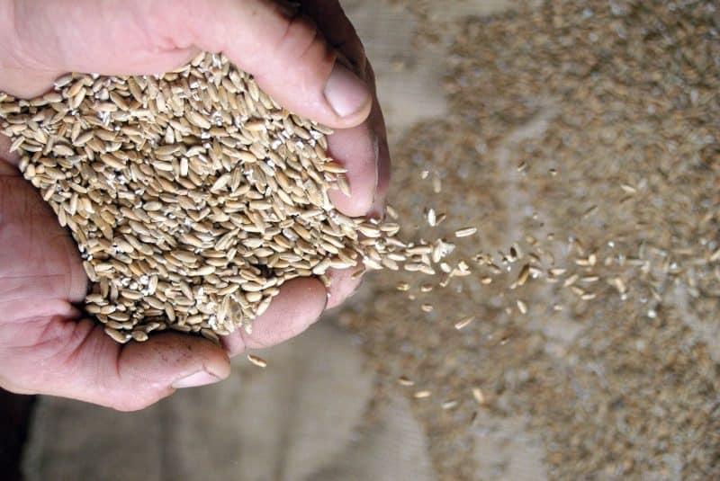 cereales en la mano