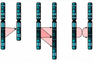 Mutación cromosómica simple