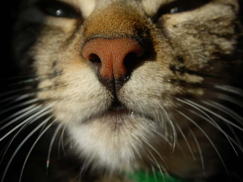 Rinario de un gato