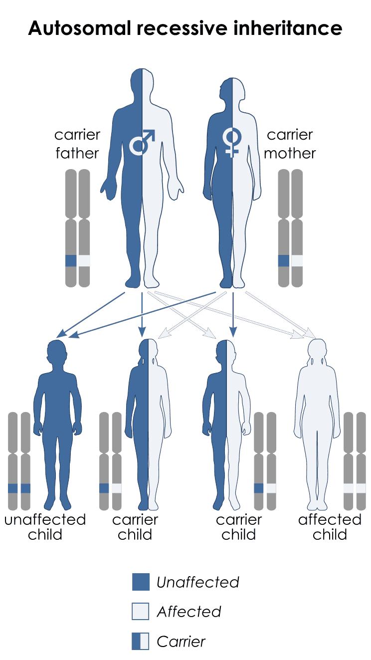 non example of sex linked genes in Esperance