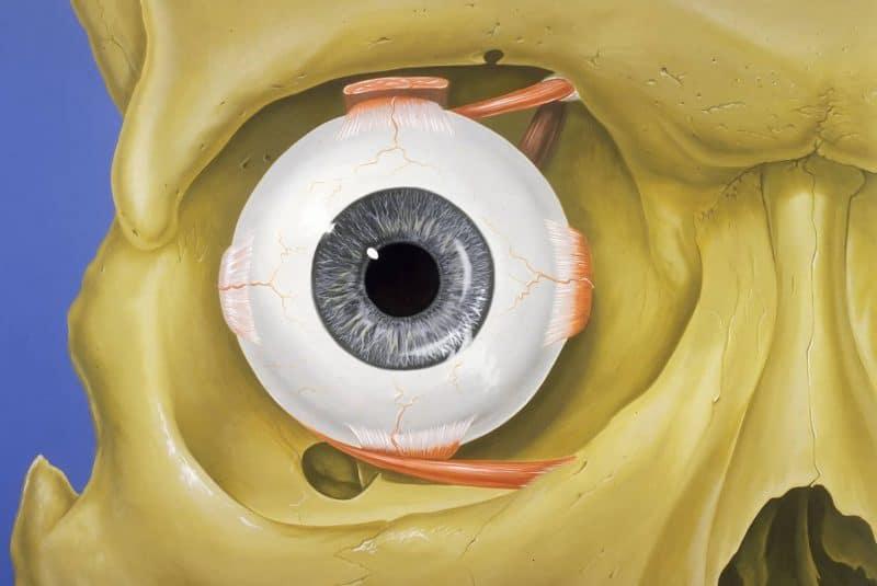Órbita ocular