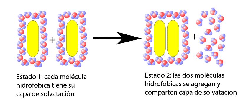 Efecto hidrofóbico
