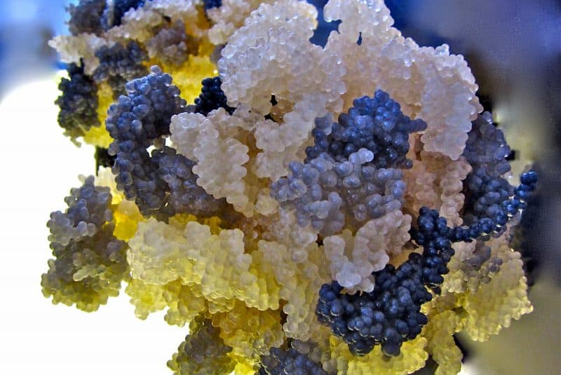 Molecular muse
