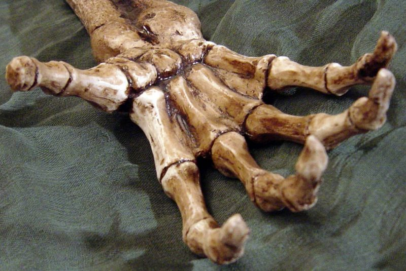 Mano de un esqueleto