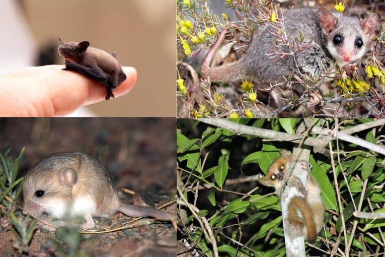Los mamíferos más pequeños