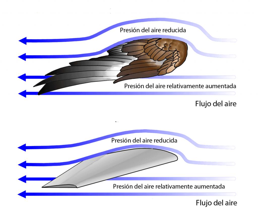 Presión alrededor de las alas