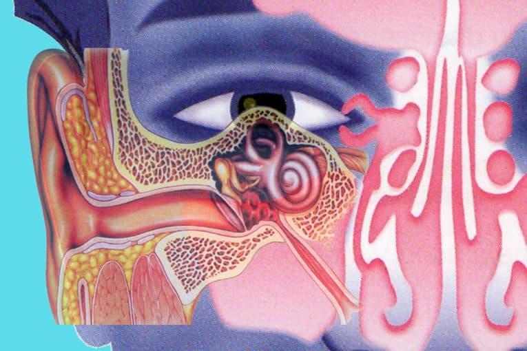 Trompa de Eustaquio, representación artística
