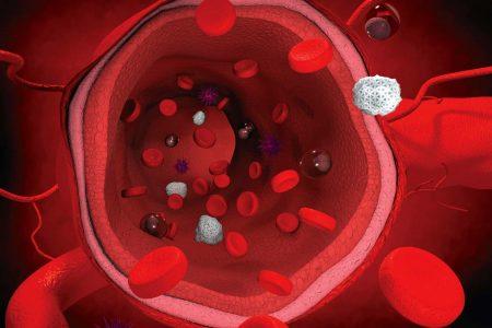 Interior de una arteria saludable