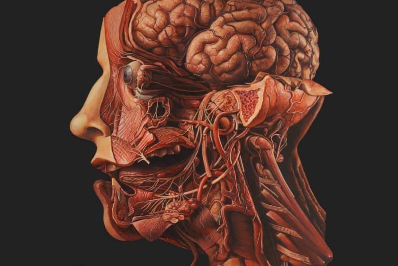 Disección de una cabeza humana (pintura)