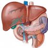Hígado y vesícula biliar