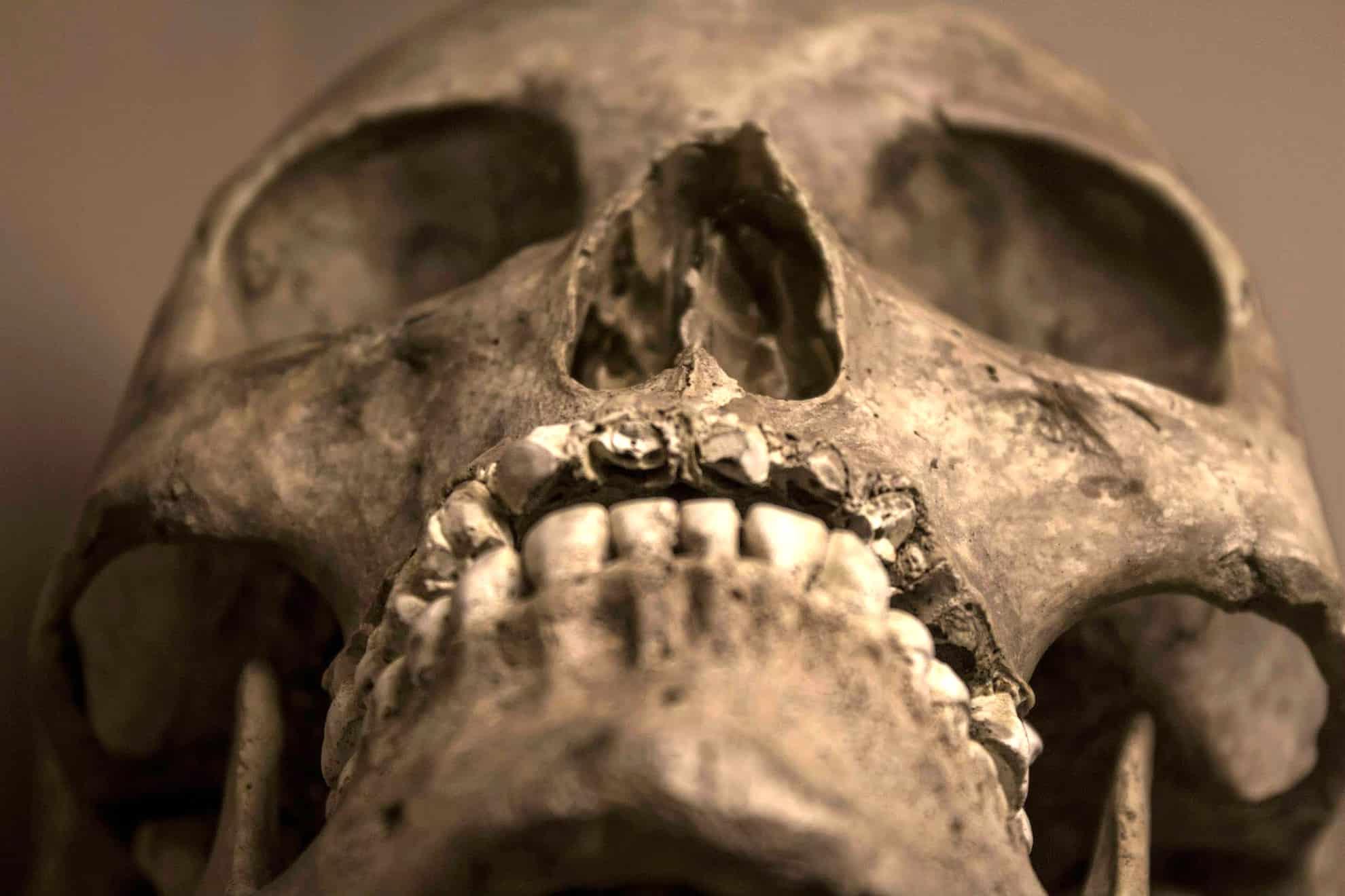 Cuál es la función del cráneo humano? – Curiosoando