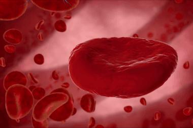Eritrocitos (ilustración 3D)