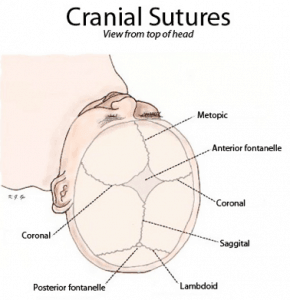 Suturas superiores en el recién nacido