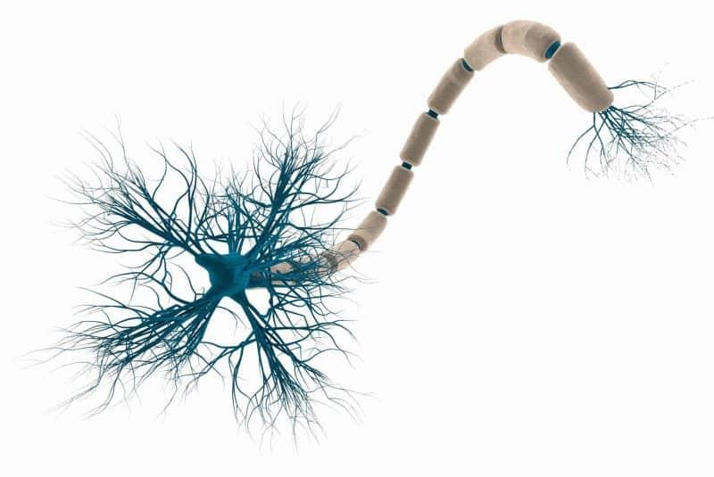 Neurona con mielina