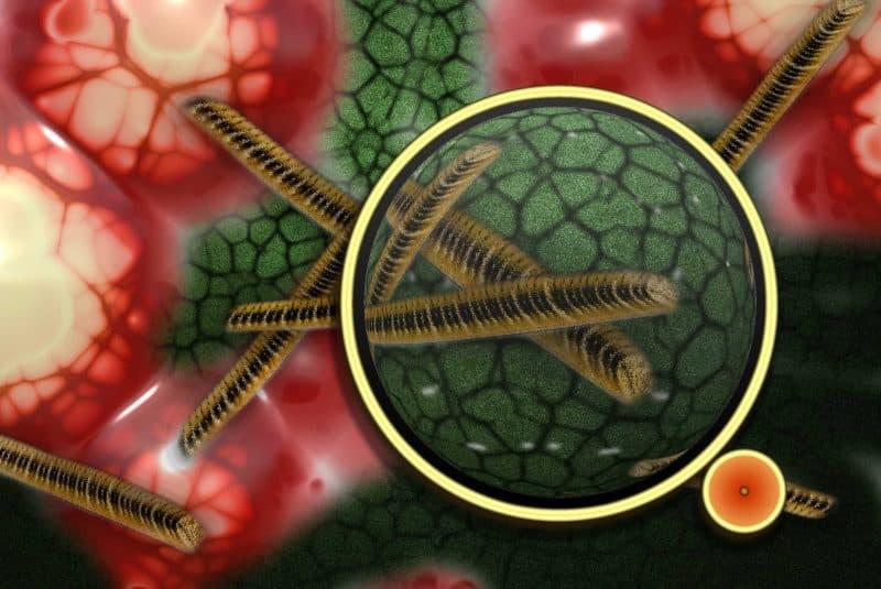 Microbios y gérmenes