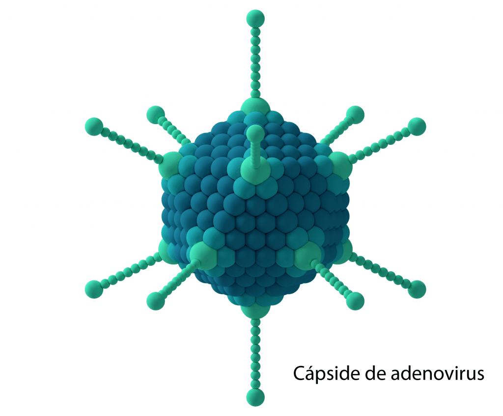 Cápside de adenovirus