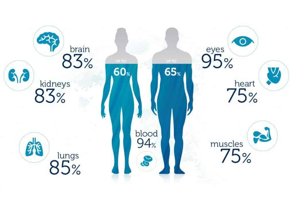 Qué porcentaje de agua tiene el cuerpo humano? – Curiosoando
