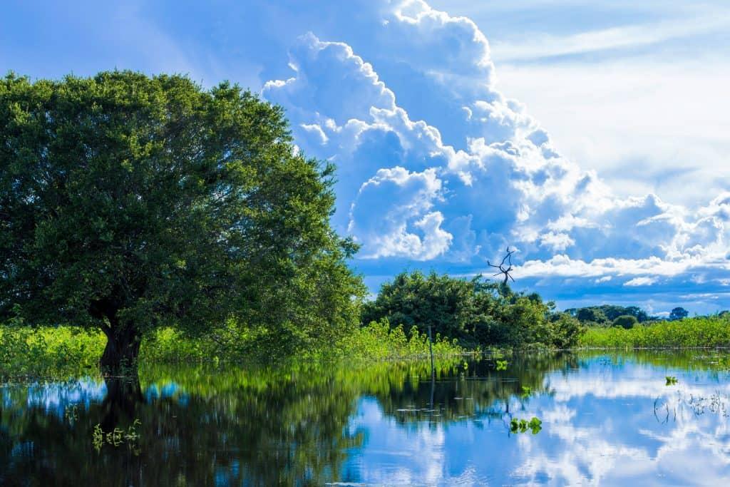 Pantanal, Mato Grosso (Brasil)