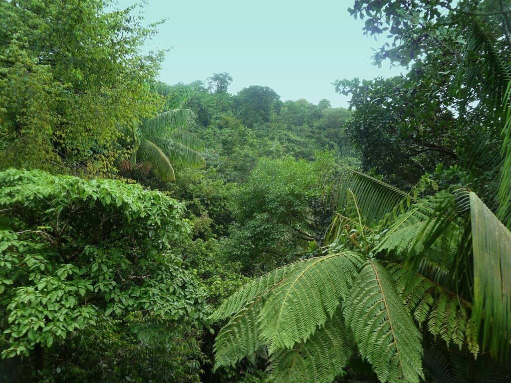 Bosque húmedo en el caribe dominicano