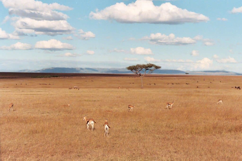 Sabana en Masai Mara, Kenia