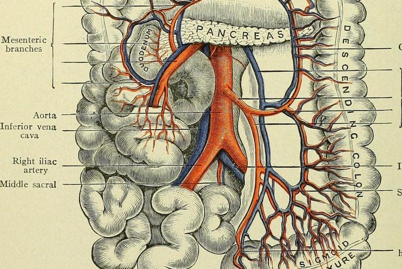 Ilustración del intestino grueso