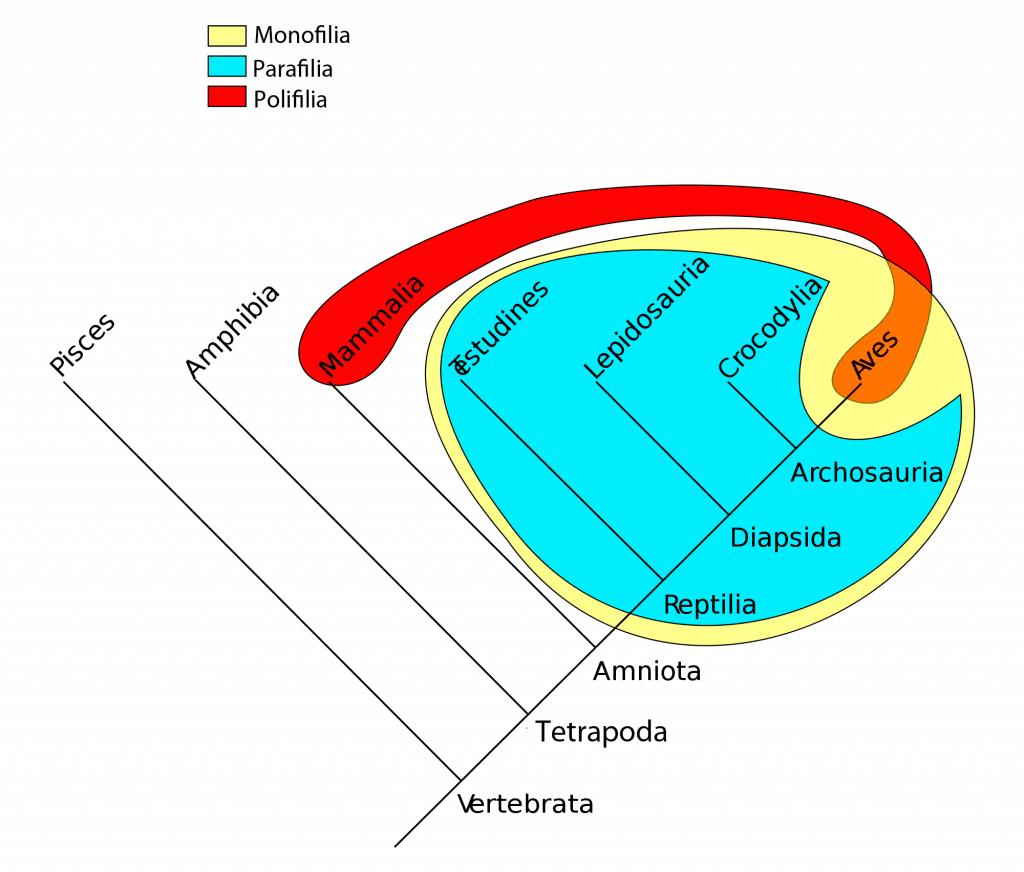 Grupos filogenéticos en vertebrados