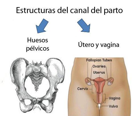 Estructuras del canal del parto