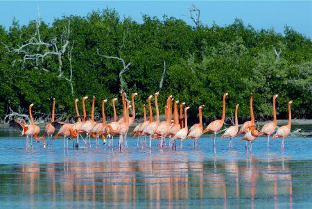 Flamencos en Ría Lagartos