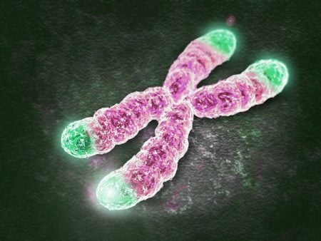 Telómeros (ilustración)