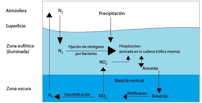 Ciclo marino del nitrógeno