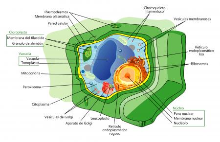 Esquema de una célula procariota típica