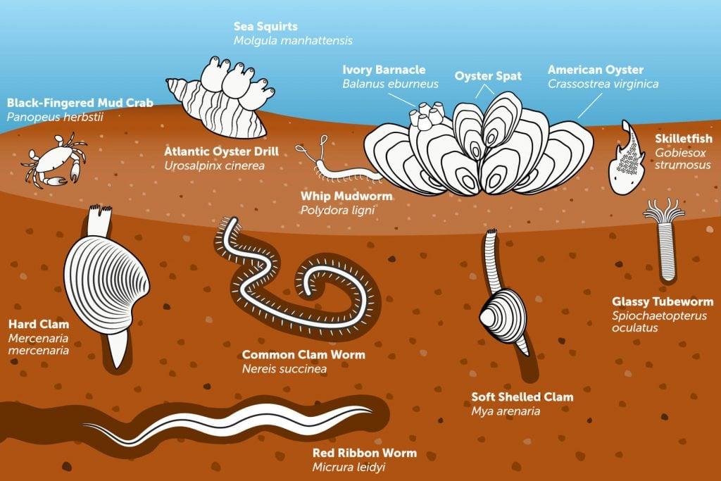 Ilustración de un ecosistema bentónico