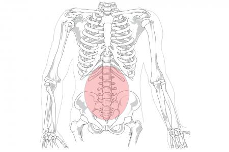 Región lumbar del esqueleto humano (dibujo)
