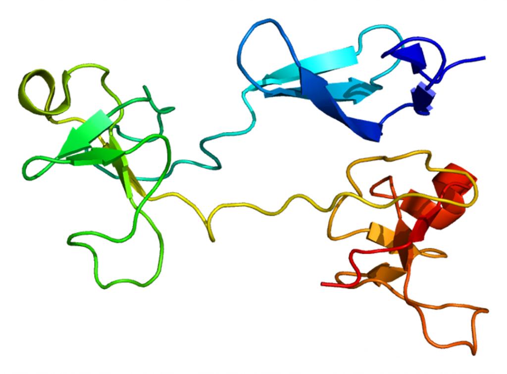 Estructura de la Fibronectina 1