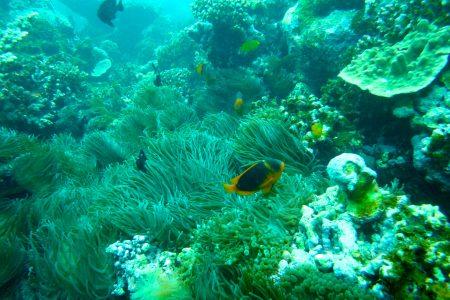 Arrecife, un ejemplo de comunidad bentónica