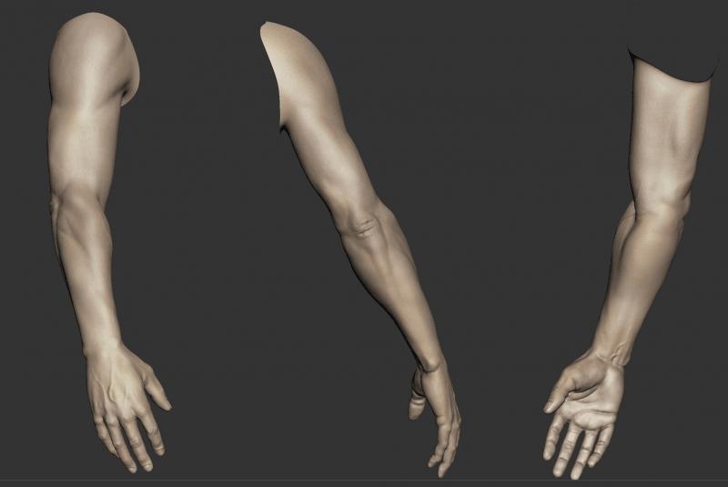 Modelos 3D brazo