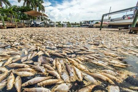Peces muertos tras una marea roja