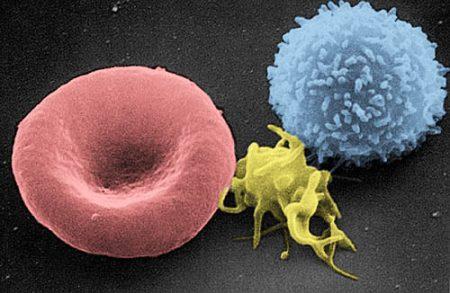 Células sanguíneas: glóbulos rojos, glóbulos blancos y plaquetas