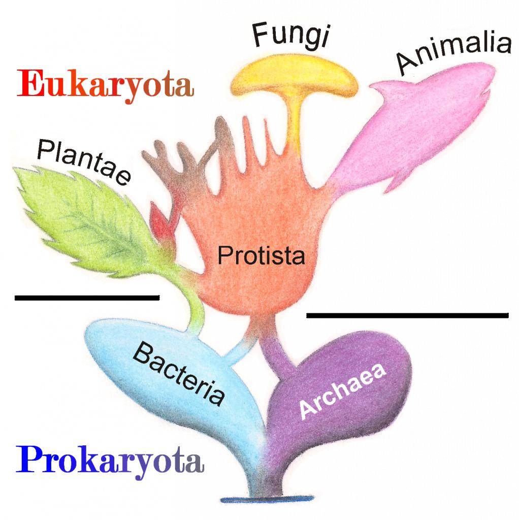 Árbol de la vida simplificado